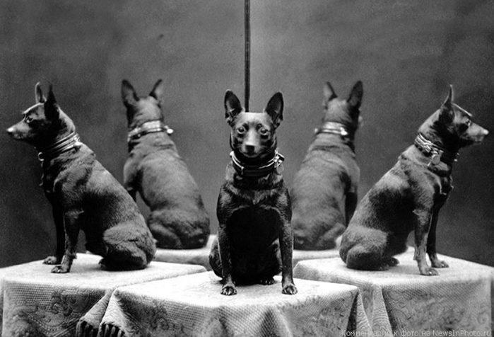 Зеркало и собака